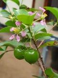 Frutas alegres no maduras con las flores fotografía de archivo