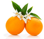 Frutas anaranjadas con el flor Foto de archivo libre de regalías