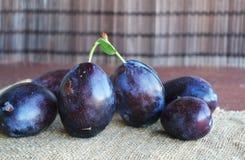 Frutas azules oscuras jugosas de los ciruelos en manos imagen de archivo