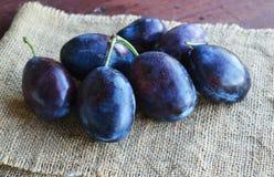 Frutas azules oscuras jugosas de los ciruelos en manos imagenes de archivo