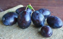 Frutas azules oscuras jugosas de los ciruelos en manos foto de archivo