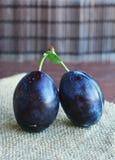 Frutas azules oscuras jugosas de los ciruelos en manos imagen de archivo libre de regalías