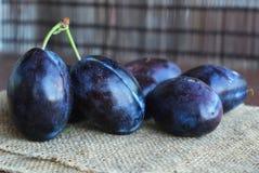 Frutas azules oscuras jugosas de los ciruelos en manos fotos de archivo libres de regalías