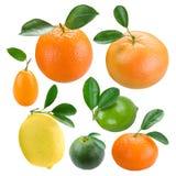 Frutas cítricas Fotos de archivo