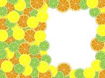 Frutas cítricas de la plantilla Fotos de archivo libres de regalías