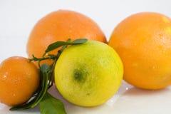 Frutas cítricas - limón Fotografía de archivo