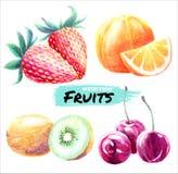 Frutas cereza, kiwi, naranja, fresa de la acuarela Fije de las frutas maduras jugosas del vector ilustración del vector