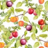 Frutas - ciruelo, cereza, manzanas Modelo natural inconsútil del vintage watercolor Fotos de archivo libres de regalías