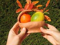 Frutas coloridas em uma cesta bonita Fotos de Stock