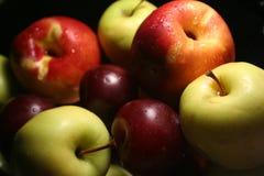 Frutas comuns Fotografia de Stock