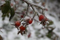 Frutas congeladas Imágenes de archivo libres de regalías