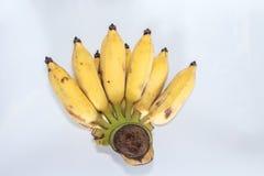 Frutas cultivadas del plátano en el fondo blanco Imagenes de archivo
