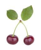 Frutas da cereja com folhas Fotos de Stock Royalty Free
