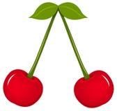 Frutas da cereja com folhas Foto de Stock Royalty Free