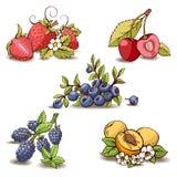 Frutas da energia Coleção do vetor para seu projeto ilustração royalty free