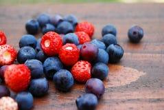 Frutas da floresta Fotos de Stock