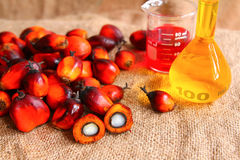 Frutas da palma de petróleo com petróleo de palma Imagem de Stock