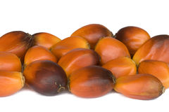 Frutas da palma de petróleo Foto de Stock Royalty Free