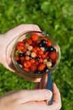 Frutas da terra arrendada da mão da mulher Fotos de Stock Royalty Free