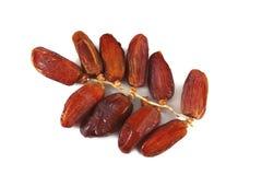 Frutas da tâmara Fotografia de Stock
