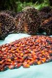 Frutas de aceite de palma Fotos de archivo