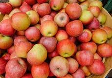 Frutas de Apple Fotografía de archivo libre de regalías