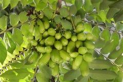 Frutas de Bilimbi foto de archivo libre de regalías
