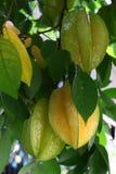 Frutas de estrella Fotografía de archivo
