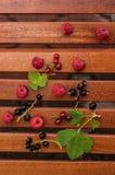 Frutas de Forrest Imágenes de archivo libres de regalías