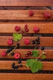 Frutas de Forrest Imagens de Stock Royalty Free
