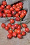 Frutas de la cadera color de rosa Imágenes de archivo libres de regalías
