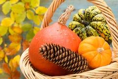 Frutas de la calabaza como decoración Imagen de archivo libre de regalías