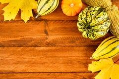 Frutas de la calabaza como la decoración y fondo Imágenes de archivo libres de regalías