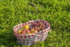 Frutas de la cesta de la comida campestre Foto de archivo libre de regalías