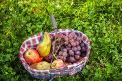 Frutas de la cesta de la comida campestre Fotografía de archivo