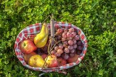 Frutas de la cesta de la comida campestre Imagen de archivo