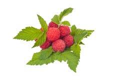 Frutas de la frambuesa Imagenes de archivo