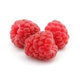 Frutas de la frambuesa roja aisladas imágenes de archivo libres de regalías