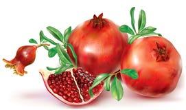 Frutas de la granada y fruta cortada Imagenes de archivo