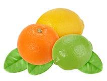 Frutas de la naranja, del limón y de la cal con la hoja verde Fotografía de archivo libre de regalías