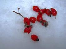 frutas de la nieve imagen de archivo