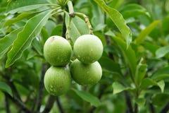 Frutas de la nuez Fotos de archivo