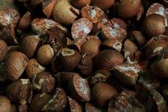Frutas de la nuez de betel Fotografía de archivo