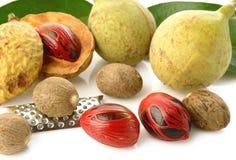 Frutas de la nuez moscada moscada Imagen de archivo libre de regalías