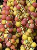 Frutas de la palma Fotografía de archivo libre de regalías