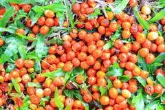 Frutas de la palma Imagenes de archivo