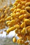 Frutas de la palma fotos de archivo libres de regalías