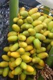 Frutas de la palma datilera Imágenes de archivo libres de regalías