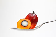 Frutas de la palma de aceite en la cuchara Fotografía de archivo