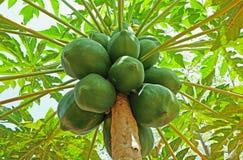 Frutas de la papaya Imagen de archivo libre de regalías